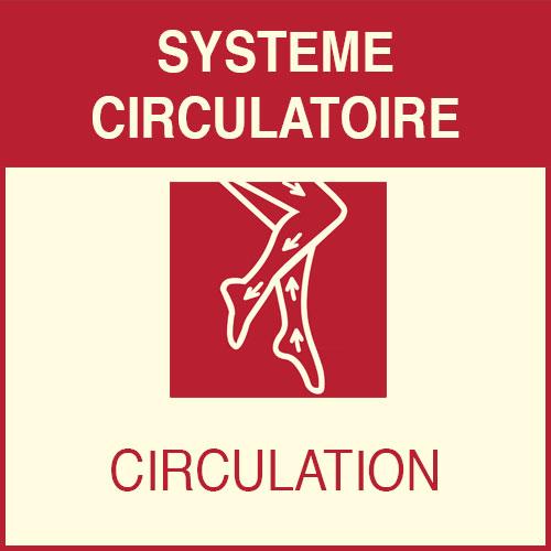 «Système