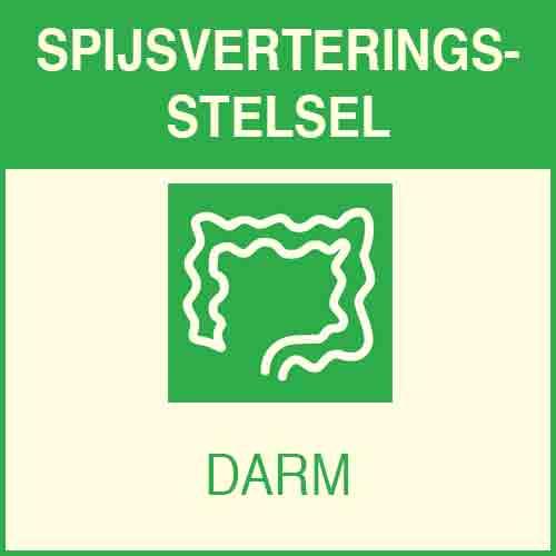 Système digestif - intestins