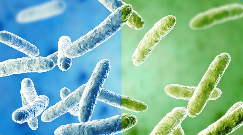 Reconstituer une flore intestinale déséquilibrée: prébiotiques + probitiques