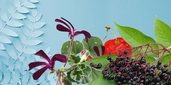 Les plantes, vitamines et minéraux qui renforcent votre immunité