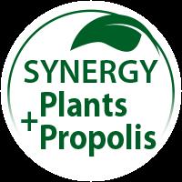 synergie-plantes-propolis_en